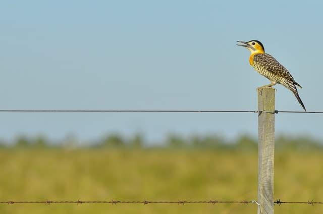 pájaro sobre poste