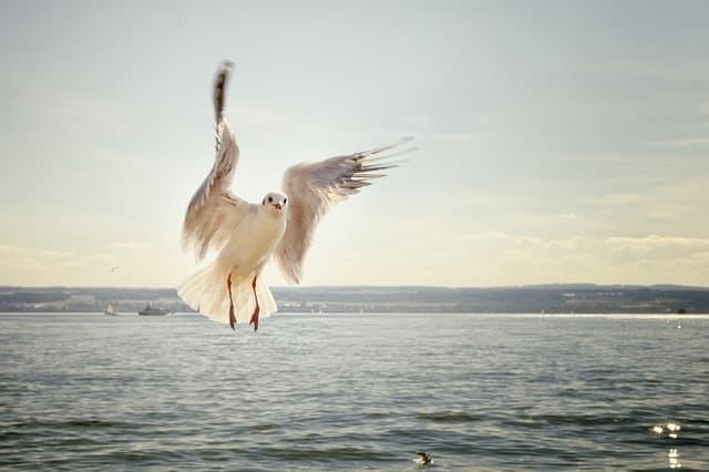 gaviota en el mar