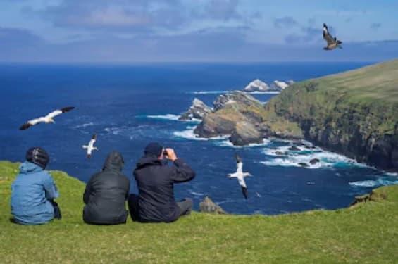 vistas de pájaros al mar